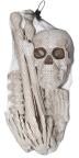 coffin bones
