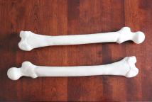 coffin bones2